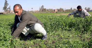 البرامج النوعية |الزراعة .. مسألة أمن قومي وطريق لاستقلال الإرادة السياسية